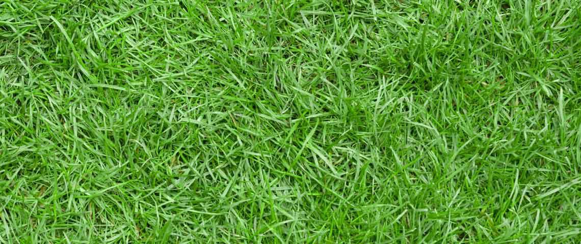 आँखों की रोशनी - grass - आँखों की रोशनी और नजर तेज करने के तरीके – चश्मा उतारने के घरेलू नुस्खे