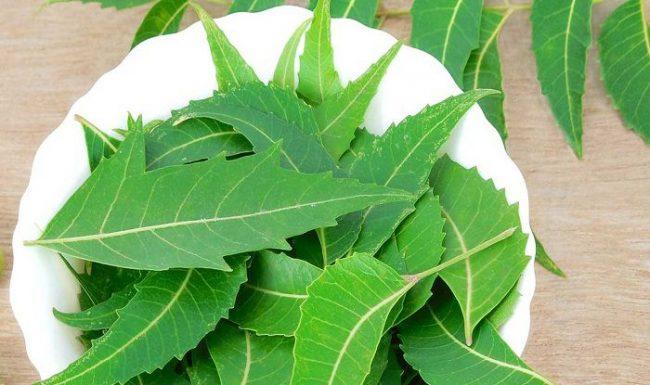 - neem ke fayde neem benefits in hindi e1533662975449 - इन आयुर्वेदिक टिप्स से पाएं सफ़ेद बालों से छुटकारा