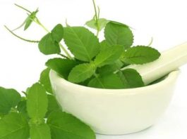tulsi ke fayde basil benefits in hindi