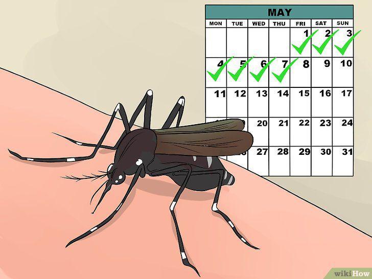 - dengue 1 - डेंगू में लाभकारी  है इस फल के पत्तों का रस,दिलाएगा २ दिनों  में डेंगू  से छुटकारा