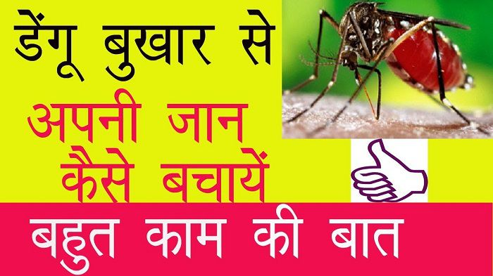- dengue se bachne ke upay - डेंगू में लाभकारी  है इस फल के पत्तों का रस,दिलाएगा २ दिनों  में डेंगू  से छुटकारा