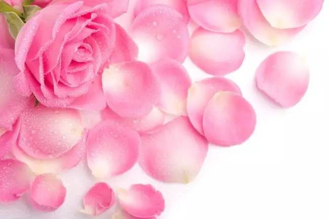 Image result for फिटकरी और गुलाबजल