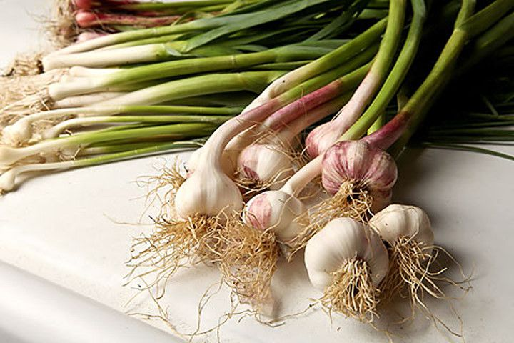 green-garlic