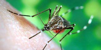 डेंगू dengue ke lakshan aur ilaj in hindi