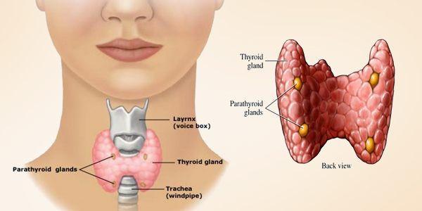 थायराइड का इलाज परहेज thyroid mein aahar diet plan in hindi