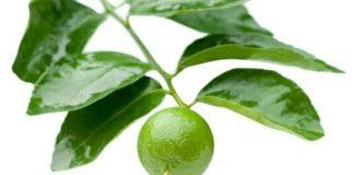 नींबू के फायदे nimbu ke fayde in hindi